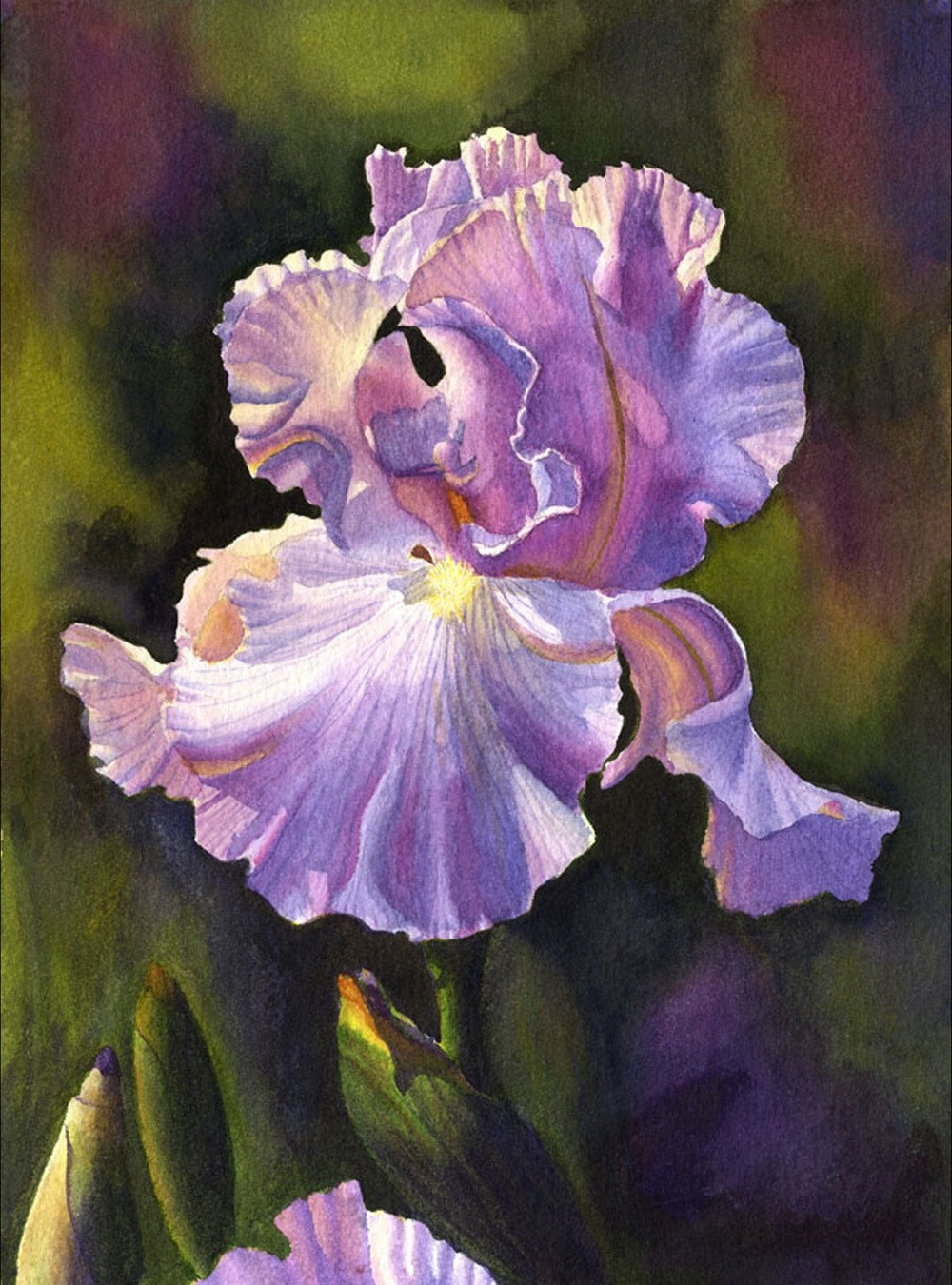 Purple Iris Art Watercolor Painting Print By Cathy Hillegas