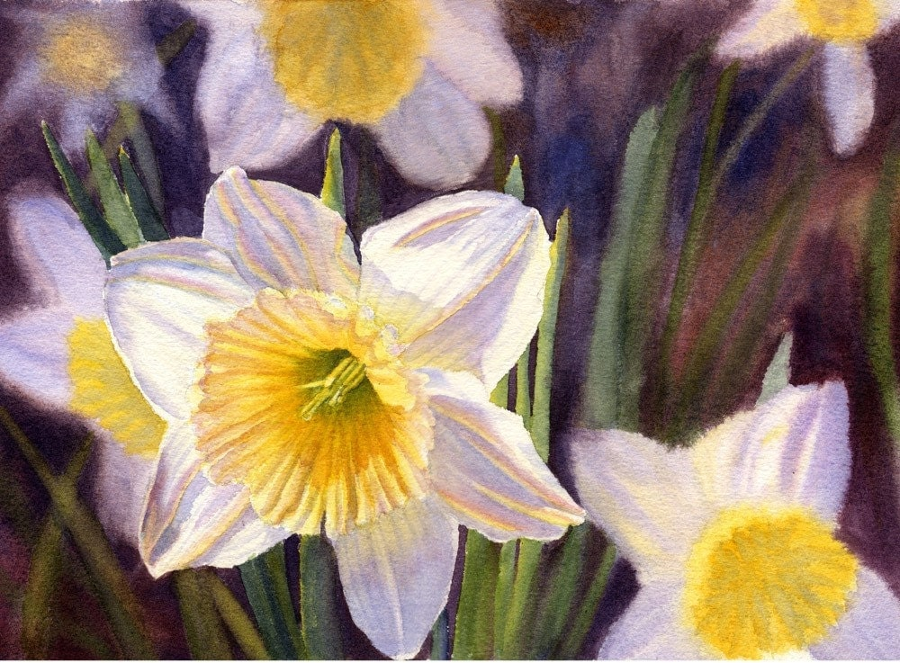 White daffodils art watercolor painting print by cathy for Spring flowers watercolor