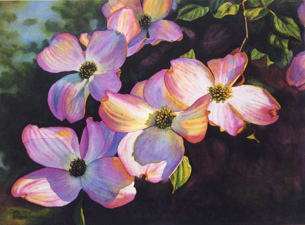 pink dogwoods art watercolor painting print by cathy hillegas