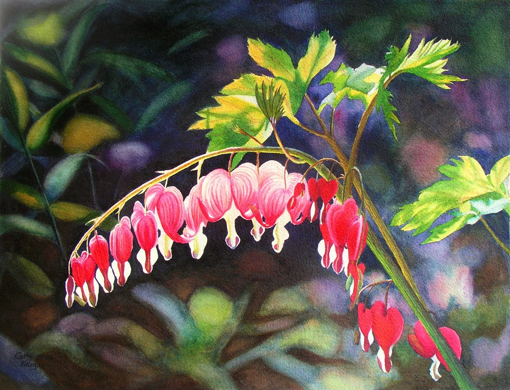 Bleeding Heart Watercolor Painting Print By Cathy Hillegas