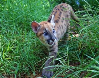 Baby Panther, takin a walk.