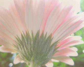 Gerbera Daisy Photo, Reaching for the Sun, Pink Daisy, Spring Floral, Garden Daisy, Bedroom Decor, Gift for Her, Gift for Mom, Wedding Gift