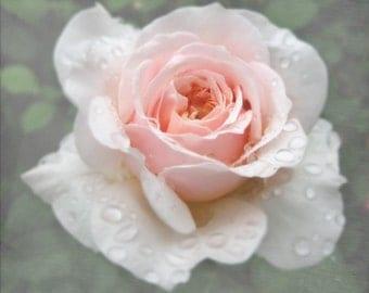 A Rose After the Rain Photograph, Rain Drops, Pink Rose Photograph