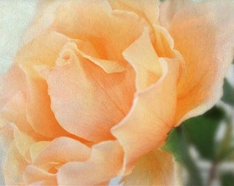 Peach Rose Photograph, Garden Rose, Romantic Florals, Garden Art, Cottage Art Decor, Gardener Gift, Fine Art Photo, Rose Wall Art