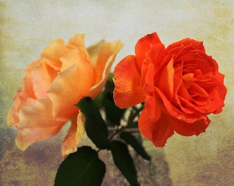 Two Roses Photo, Peach and Orange Roses, Floral Decor, Fine Art Photo, Romantic Wall Decor, Nature Photograph, Flower Photograph, Rose Photo