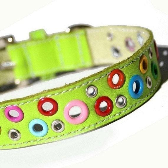XXL Loki Puppy Leather Dog Collar - Key Lime Green