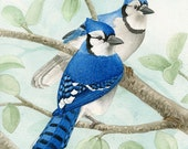 Bird Tree with Blue Jays - 5x7 archival watercolor print by Tracy Lizotte