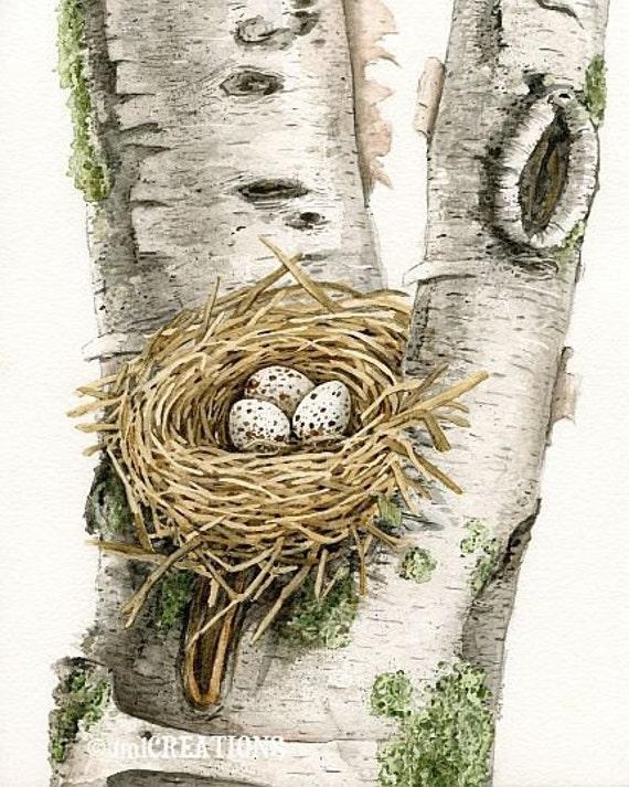 Cardinal's Nest In Birch Tree