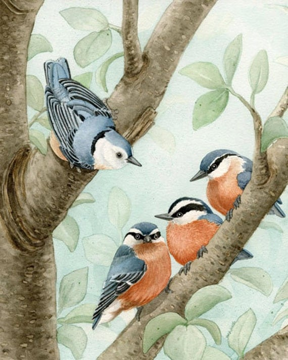 Bird Tree with Nuthatches - 11x14 archival watercolor print by Tracy Lizotte