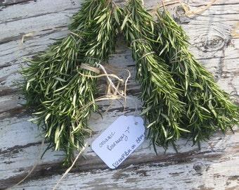 "Fresh Organic  ROSEMARY Bundles / ten fragrant 7""sprigs / Delicious / Fresh Cut / Wedding Favors / Wedding Invitations and Settings"