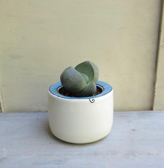 SALE 15% off // Green succulent plant in ceramic pot with a blue stripe design,  garden succulent planter