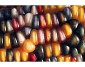 Colorful Corn, photo notecard