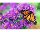 Butterfly, photo notecard