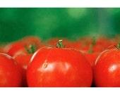 tomatos, photo notecard