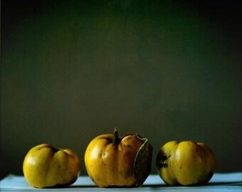 Three quince in autumn light, Fine art photograph, print 8x8