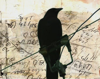 What Crows Reveal  - Fine Art photographic print