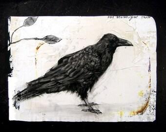 Crow study III - Limited Edition Fine Art Print