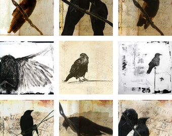 "Collection of Crows - nine 5""x5"" prints"