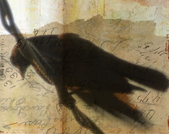 What Crows Reveal III  - Limited Edition Print of Original Mixed Media