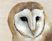 Original Painting - Barn Owl