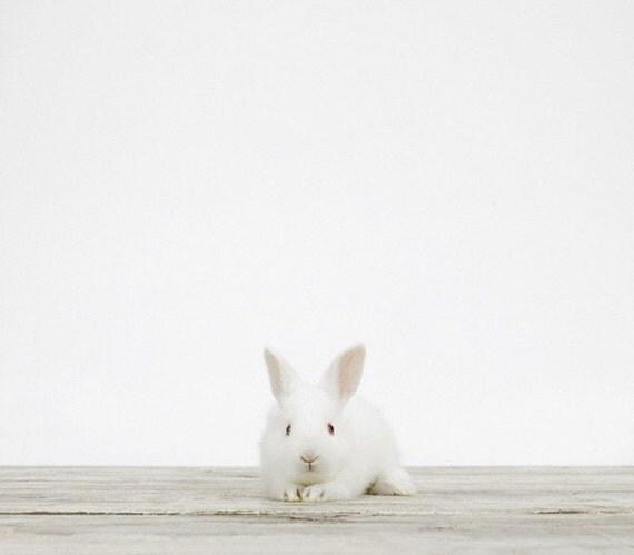 Baby Bunny No. 1, 7 x 8 Fine Art Print