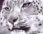 Snow Leopard  - Limited Edition Giclee Print