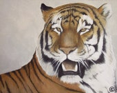 Siberian Tiger - Limited Edition ACEO