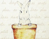 Mon Petit Lapin 8 x 10 Bunny Rabbit Print
