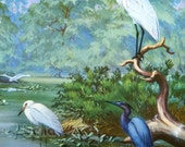 Vintage BIRDS Print - Water Birds -  Egret and Herons - 1930s Book Illustration by Walter Alois Weber