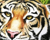 Tiger  Drawing - Tiger Art - Safari Ilustration - 16 x 10 Print - PeggithasPortraits