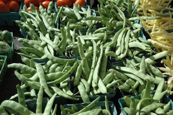 Organic Heirloom Bush Blue Lake 274 Garden Bean Seeds