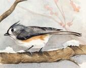 "Bird Watercolor Giclée Print ""Tufted Titmouse"""