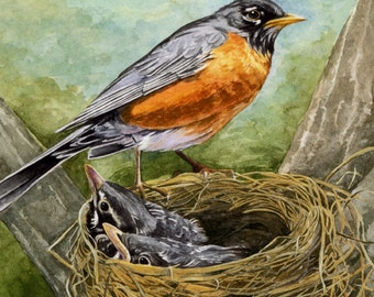 Robin with Nest and Baby Birds Giclée Print - Proud Vigil