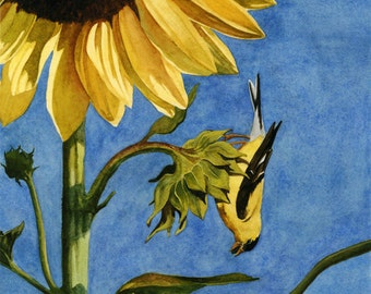 Goldfinch and Sunflower Watercolor giclee  5 x 7 print - Bird's Eye View