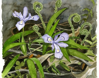 "Purple Iris and Fiddlehead Ferns Watercolor Print ""Forest Floor"" (14"" x 14"")"