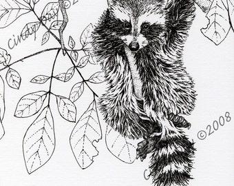 "Raccoon in the Treetops Pen & Ink Print ""Canopy Acrobat"""