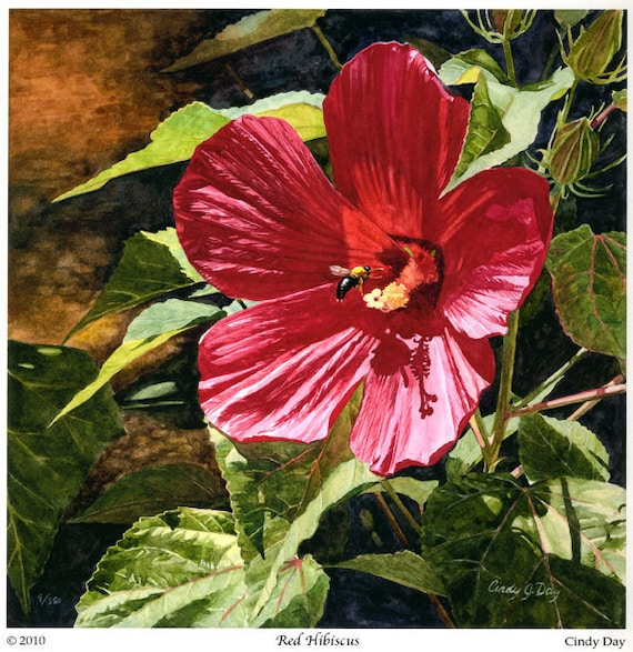 "Watercolor Giclee print of ""Red Hibiscus"" Flower Botanical with bumble bee in Summer by Cindy Day"