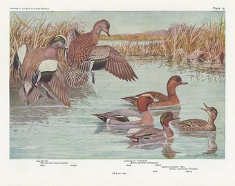 Duck Prints Plates 13 & 14