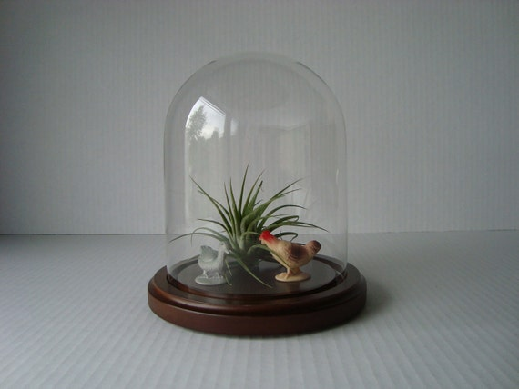 Cover Your Treasures Vintage Clear Glass Dome Cloche With