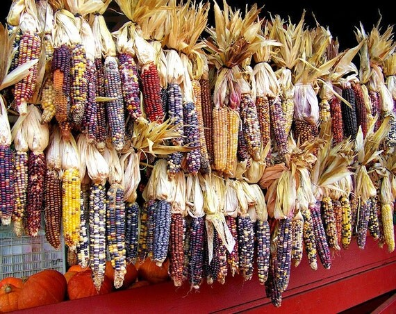 Autumn Maize Indian Corn Landscape Fine Art Print - Nature, Botanical, Wildlife, Garden, Nursery Decor, Home Decor, Baby, Zen, Gift