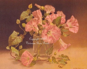 Old French Morning Glories, Art Print, Half Yard Long, Maguire, Shabby Chic Decor, Flower, Floral