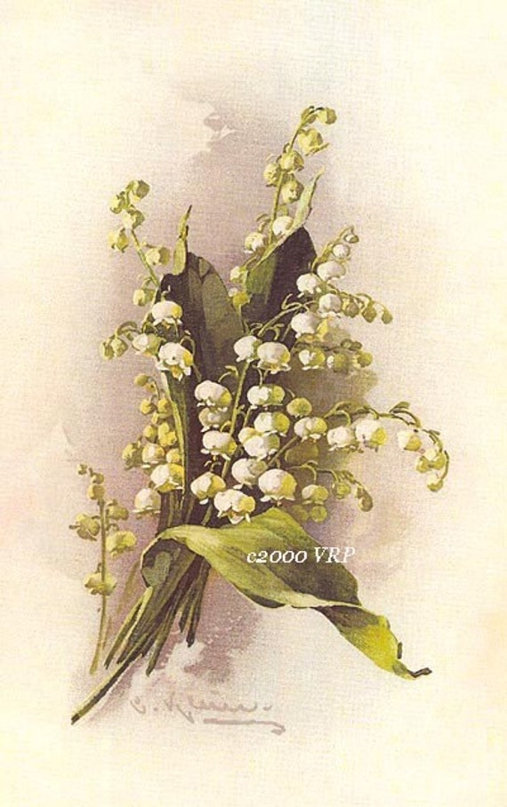 Print Free Ship Lily Of The Valley Flower Catherine Klein Half