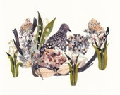 "Mourning Dove, Hydrangeas, and Snow Drops - 11"" x 14"" Archival Print"