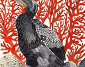 "Cormorant and Red Coral - 8"" x 10"" Archival Print"