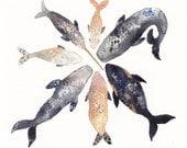 Whale Pod - Archival Print