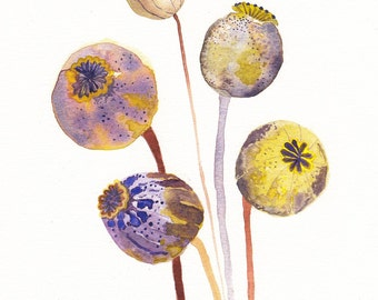 "Poppy Pods - 11"" x 14"" Archival Print"