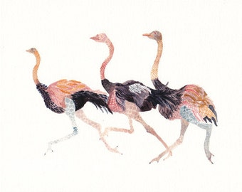 Three Ostriches - Archival Print