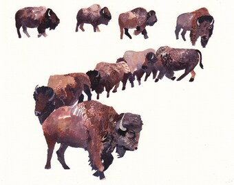 Bison Herd - Large Archival Print