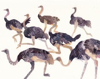 Ostrich Herd No. 2 - Archival Print