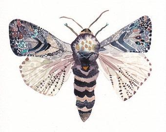 "Moth - 8.5"" x 8.5"" Archival Print"
